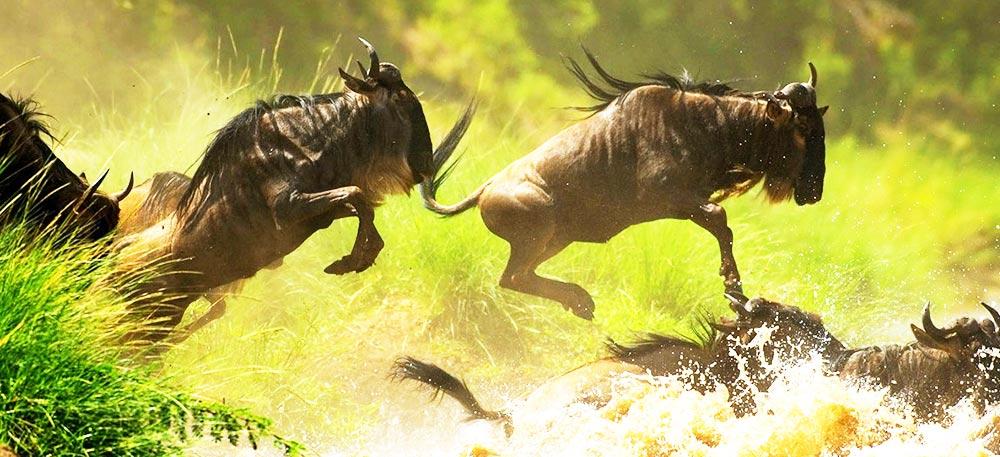 Great Wildebeest Migration Safari